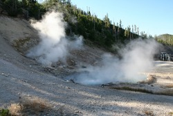 A geyser blowing steam just off the road at Yellowstone National Park
