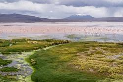 A giant flock of James's flamingoes, cousins to the andeam flamingo at Laguna Colorado, Bolivia