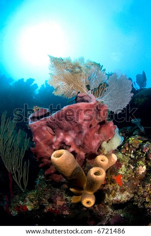 A giant pink barrel sponge is adorned with tube sponges and gorgonian sea fans