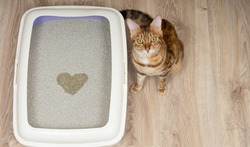 A gift for Valentine's Day from a domestic cat.