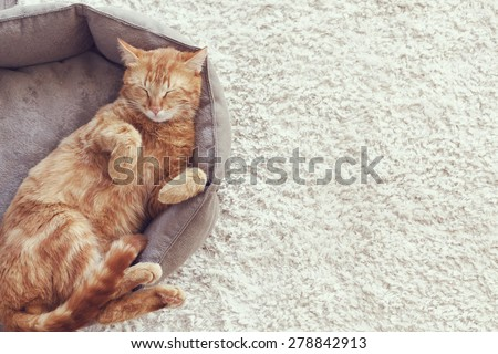 A ginger cat sleeps in his soft cozy bed on a floor carpet #278842913
