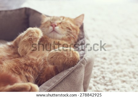 A ginger cat sleeps in his soft cozy bed on a floor carpet, soft focus #278842925