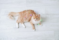 A ginger kitten lies on the floor with a Christmas glowing garland. View from above.