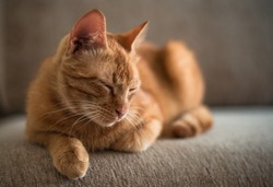 a ginger tabby cat is lying on a sofa at home
