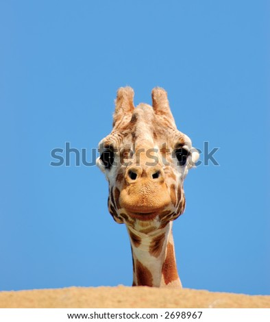 A giraffe is peeking from behind a rock against blue sky.