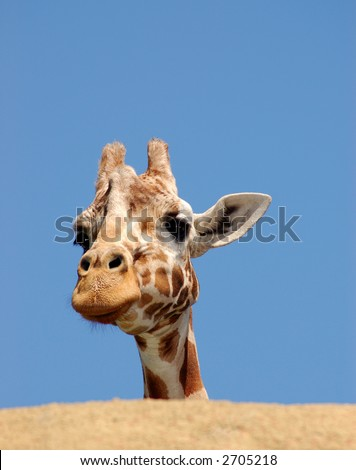 A giraffe is peeking from behind a rock against blue sky. - stock photo