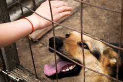 A girl holds out her hand to a German shepherd in a dog kennel. Shelter for stray dogs. Pets waiting for home. A look full of hope.Pet, German Shepherd Dog.