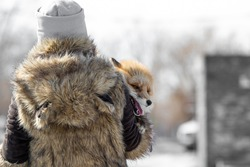 A girl in a fur coat with a red fox in her arms on the street in the city. Animal abuse and domestication. Protecting nature and wildlife. Rejection of natural fur coats and killing animals.