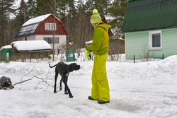 A girl in a winter tracksuit dresses two hunting dogs in the woods
