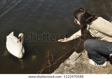 A girl is feeding from a swan's hand in Baltiysk on April 30, 2018 #1122470588