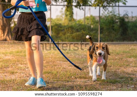 A girl walking beside her own lovely cute beagle dog for professional obedience training course at canine school.