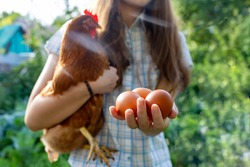 A girl with a chicken and eggs in her hands on a sunny day. Subsistence farming and organic food concept