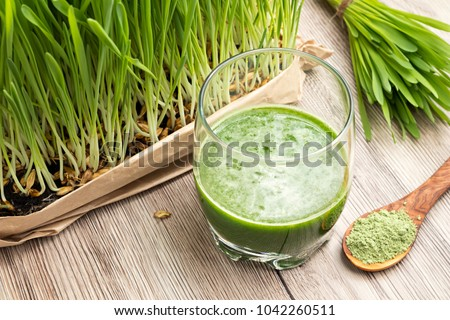 A glass of barley grass juice with young homegrown barley grass and green barley powder in the background #1042260511