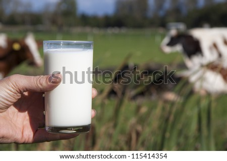 A glass of milk with cows on the background