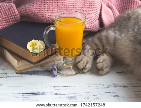 Photo of A glass of orange juice, old books and grey cat's paws. Free copy space.