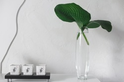 a glass vase with two green leaves of the Hosta plant stands on a table next to a black candlestick on a stand against a white wall