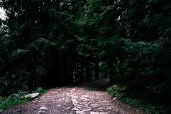 A gloomy path going toward a dark forest. Concept for horror scenary, murky, somber.