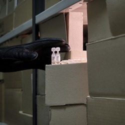 A gloved hand steals medicines from a warehouse. Coronavirus vaccine storage problem and drug shortage