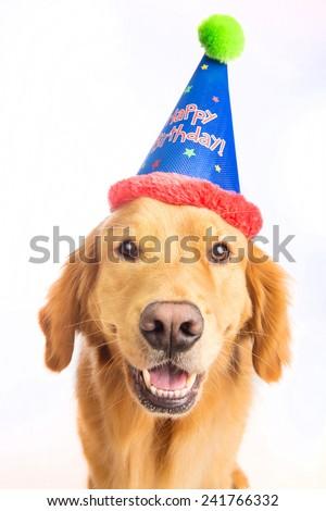 A Golden Retriever Dog Celebrating A Birthday Ez Canvas