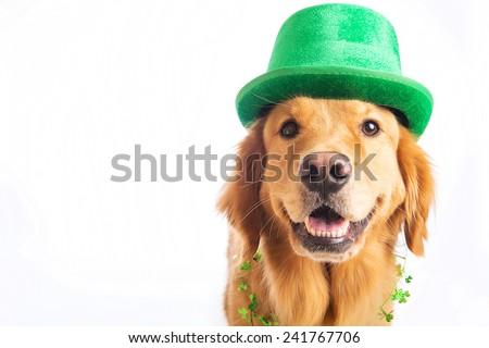 A golden retriever dog celebrating a birthday