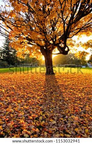 A Golden Tree #1153032941