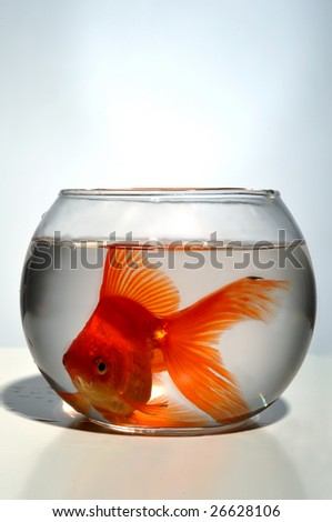 A goldfish cramped in a small bowl, close up