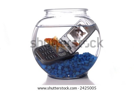 goldfish bowl and cat. stock photo : A goldfish in a