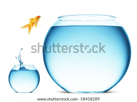 A goldfish jumping out of the water to escape to freedom. White background. stock photo