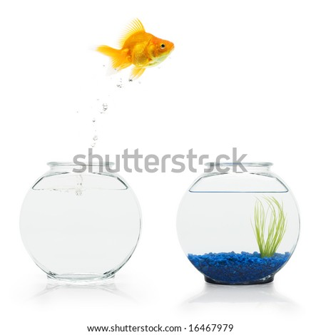 A goldfish leaping from a bare fishbowl to a more decorative one.