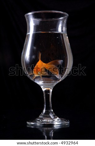 A goldfish swims around in a wineglass filled with water. Black background.