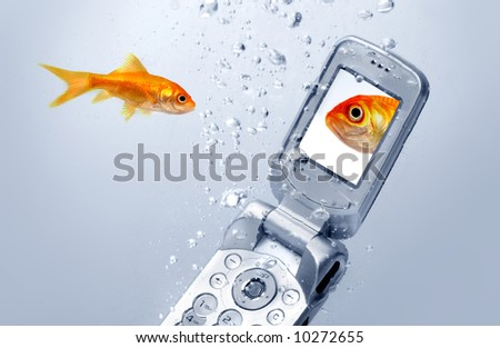 A goldfish swims by a cell phone,  A picture of a friend is displayed on the screen of the cell phone.