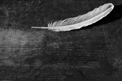 A goose feather on an aged antique dark old  wood background. Quill pen for writing. History, art. The concept of language, literature, editing, school, learning, metaphor, poetry. Selective focus. BW