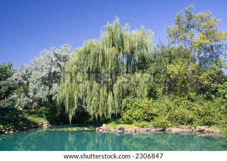 A gorgeous Weeping Willow stands next to a pond in the Montreal Botanical Garden.