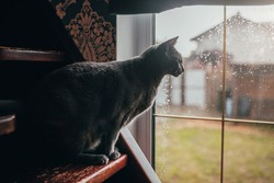 A graceful graceful cat with a smoothly curved back melancholy looks through a window a lady on a rainy day outside the window