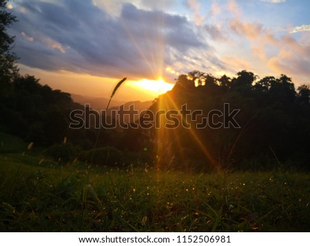 a grass blossom with sunset sky light and mountain in the background  #1152506981
