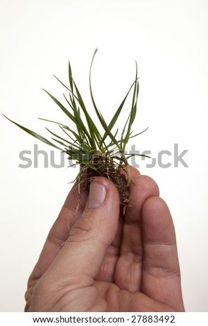 A grass plant being held up in a hand signifying the importance of environmental awareness.