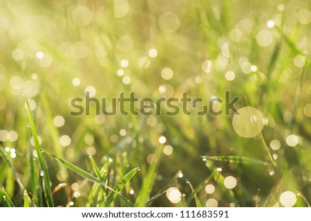 a grass with dew closeup