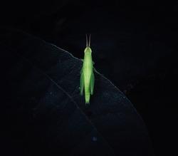 A grasshopper in the pose