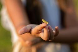 A grasshopper on a finger