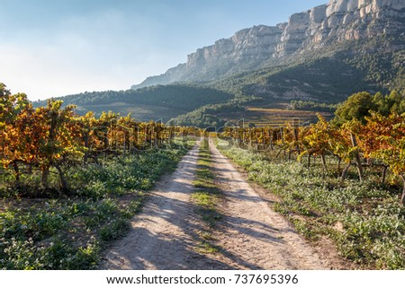a gravel road along a vineyard with green yellow and red leaves and grapes in unesco site priorat area, catalonia spain