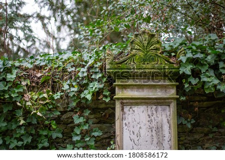 A gravestone with ivy on a former cemetery ストックフォト ©