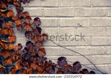 A gray brick wall background with a corner border of grape vines and autumn orange and brown leaves.  Room for copy space.  Filtered for a retro vintage look.