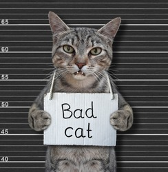 A gray cat criminal has a sign around his neck that says Bad cat. Lineup black background.
