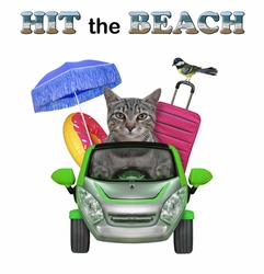 A gray cat drives a green car to the sea. Hit the beach. White background. Isolated.