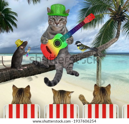 A gray cat in a hat with an acoustic guitar is sitting on a fallen palm tree in a beach of Maldives over the sea water. Foto d'archivio ©