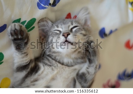 a gray cat / kitten sleeping