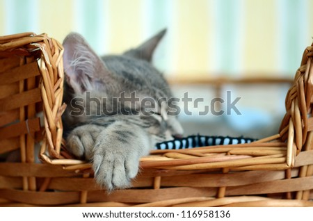 a gray cat / kitten sleeping in basket