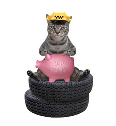 A gray cat taxi driver in a yellow cap puts money in a piggy bank for a new car. White background. Isolated.