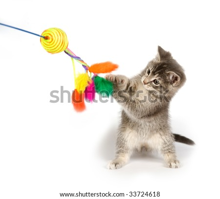 A gray kitten playing with a toy on a white background