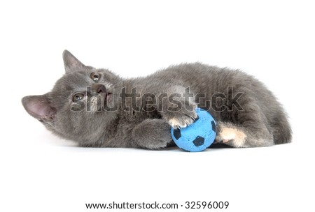 A gray kitten playing with toy blue soccer ball on white